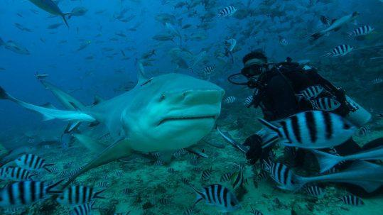 Real Sharknado